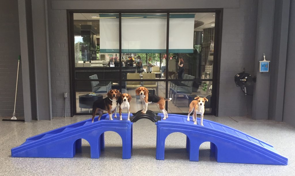 Day Camp Beagles