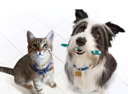 dog cat teeth