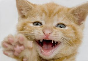Kitten making a funny face