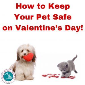 Valentine's Day Safety