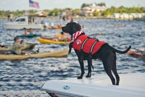 swimming safety for dogs plays an important part in pet safety