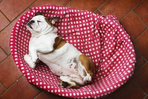 Pet tummy trouble should be addressed by a veterinary exam