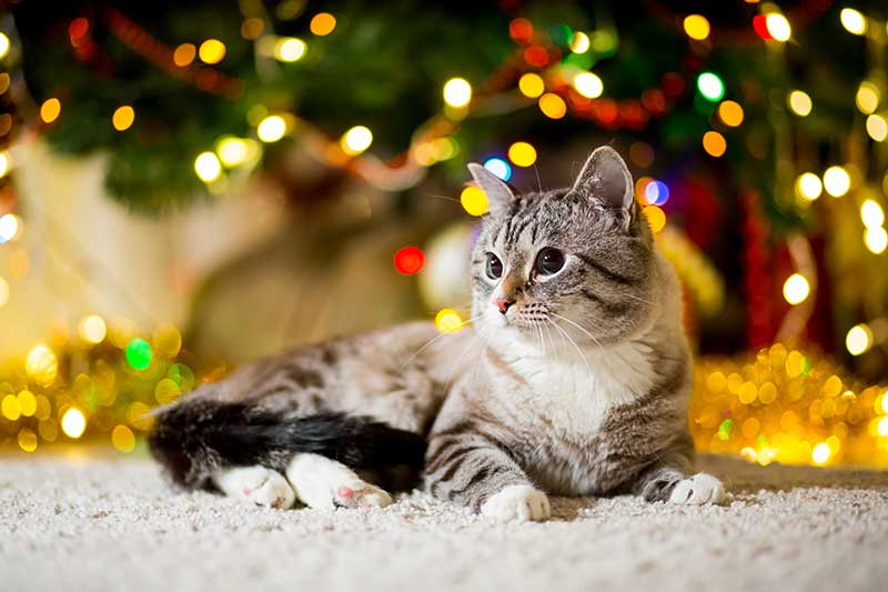 Holiday pet safety keeps pets safe and healthy