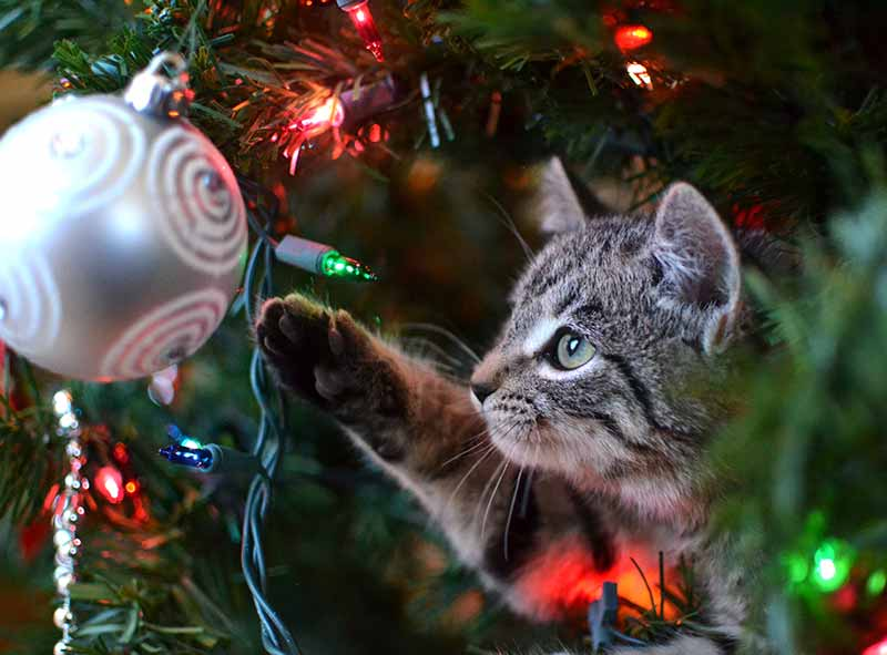 Holiday pet safety helps prevent a pet emergency over the holidays