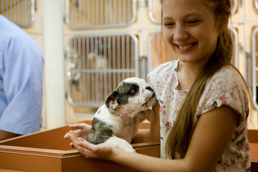 Adopting a new puppy is an exciting time for a pet owner