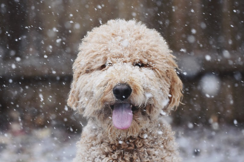 Practicing winter pet safety can protect pets from antifreeze poisoning and more!