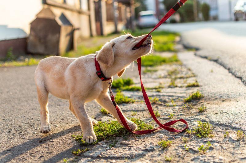 Animal Medical Hospital Blog – Charlotte, NC | 5 Ways to Encourage Good Behavior in Dogs - Animal Medical Hospital Blog - Charlotte, NC