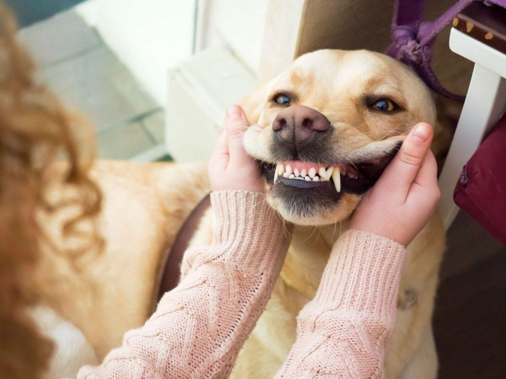 vet checking pet's dental health
