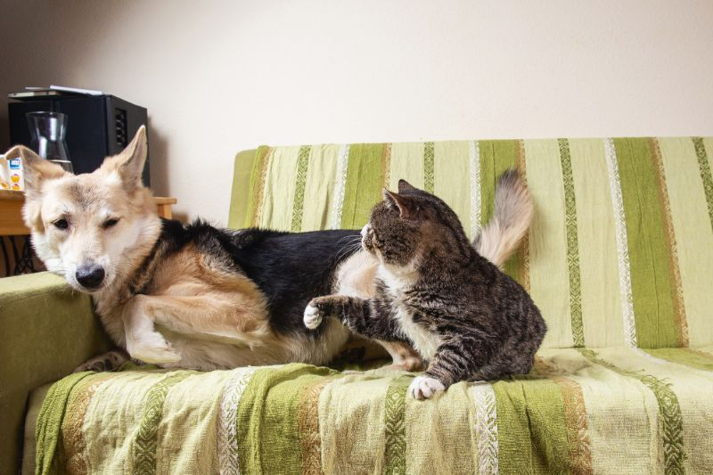 A cat is getting ready to hit a dog.