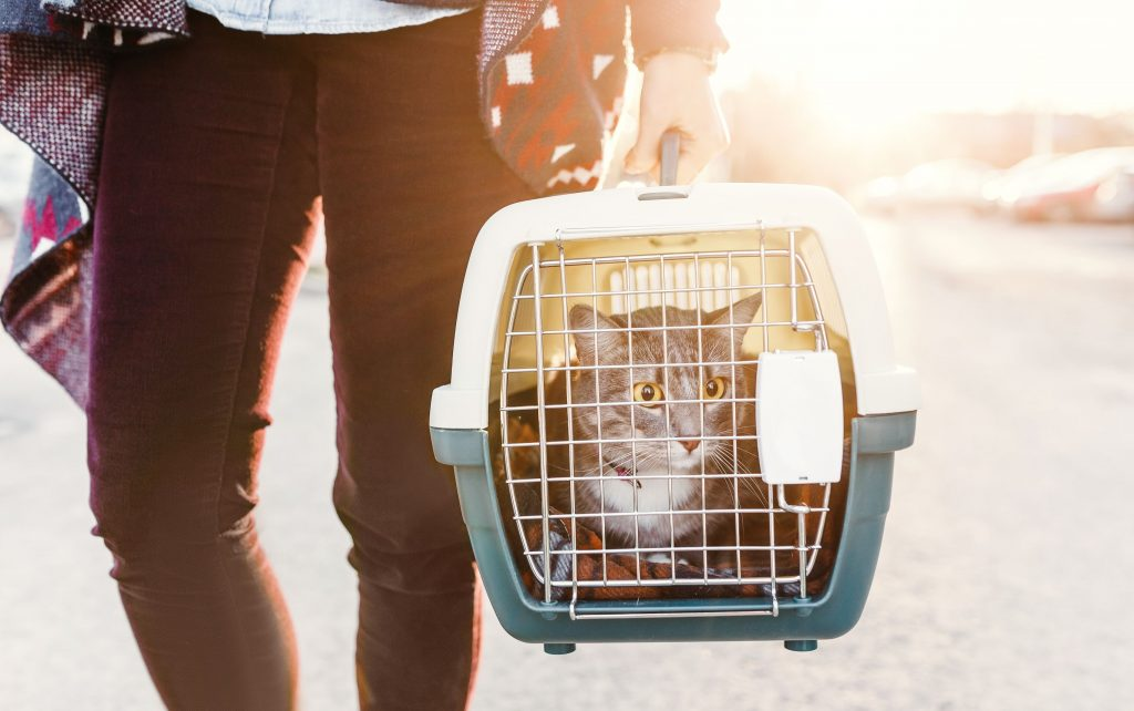 A person carries their cat in a cat carrier.