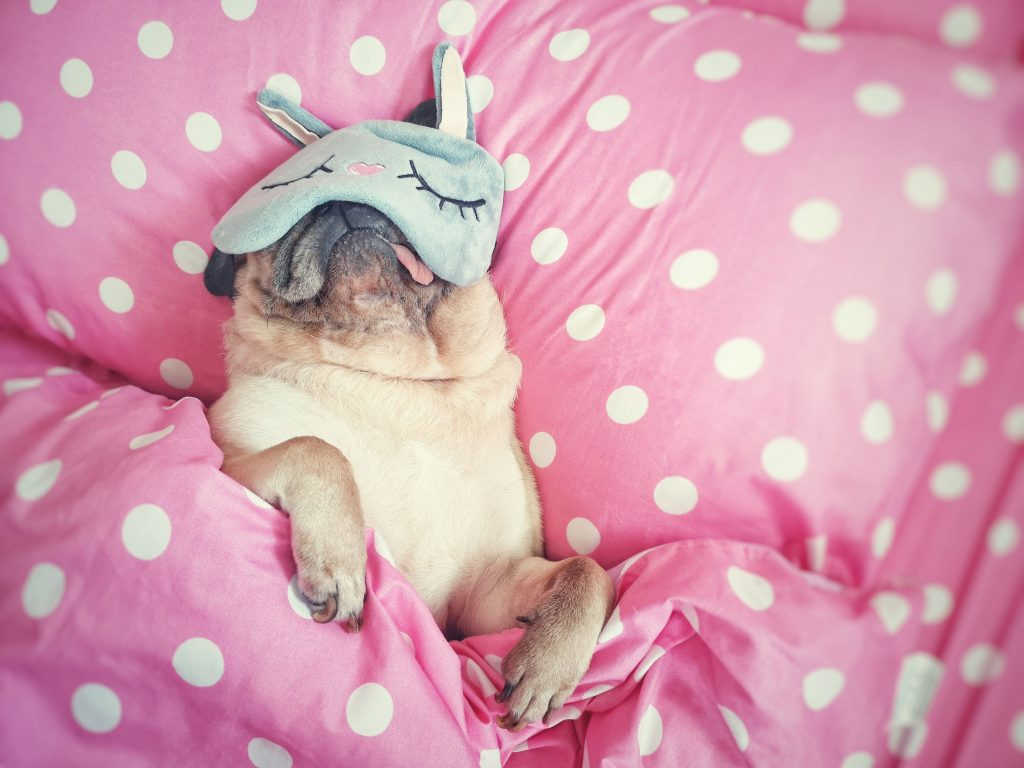 Tired dog.