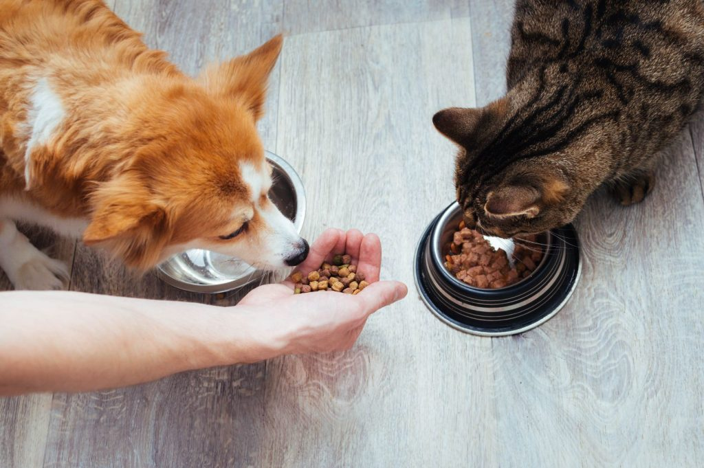 Dog and cat eating.