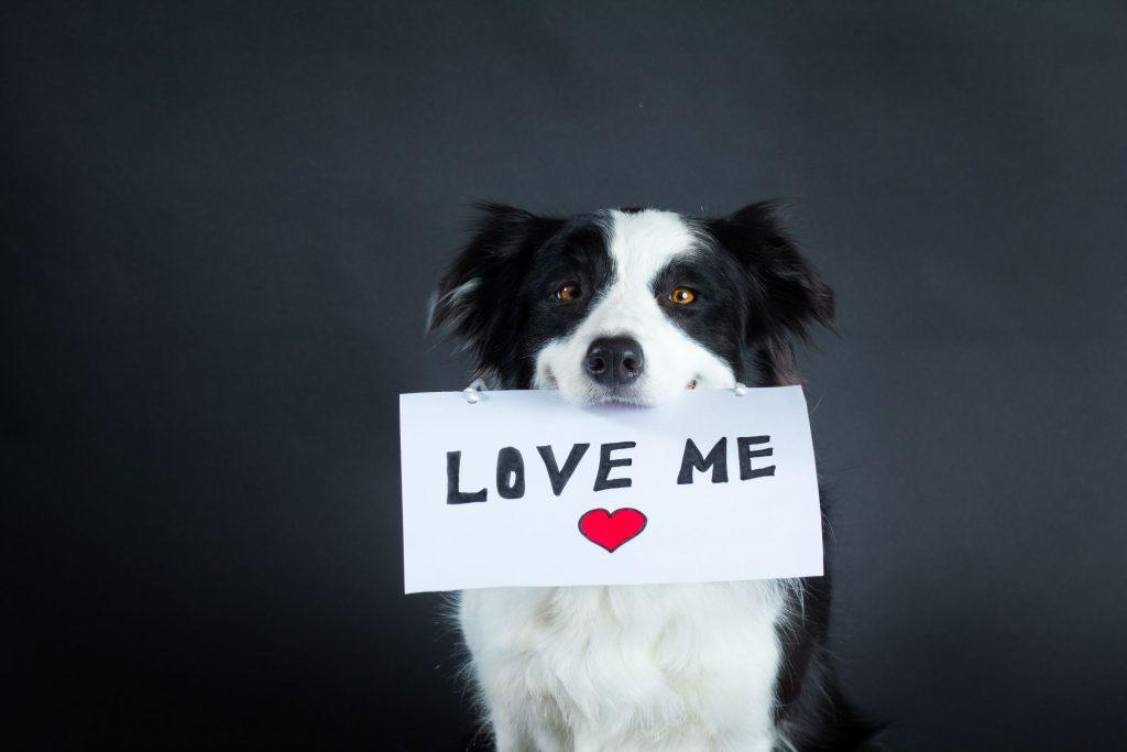 Dog for adoption.