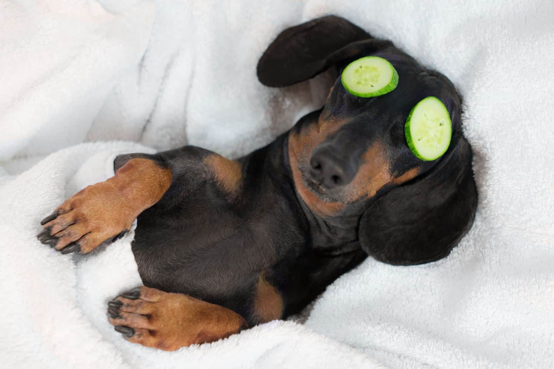 Pampered dog.