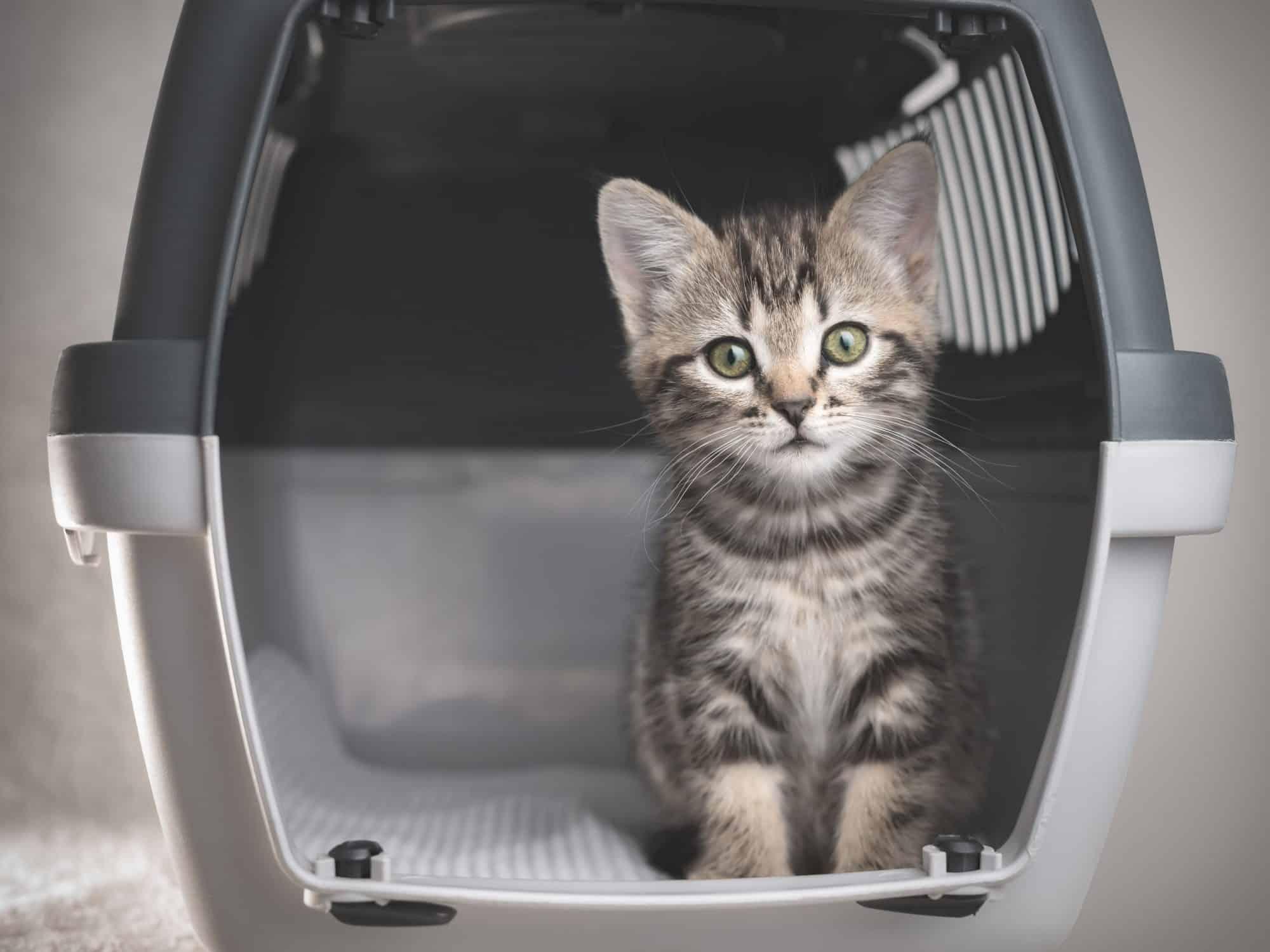 cat in carrier.